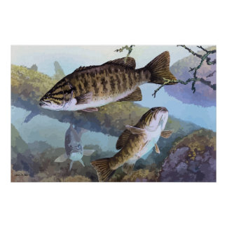 Smallmouth bass painting poster