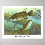 Smallmouth Bass Painting Poster Print