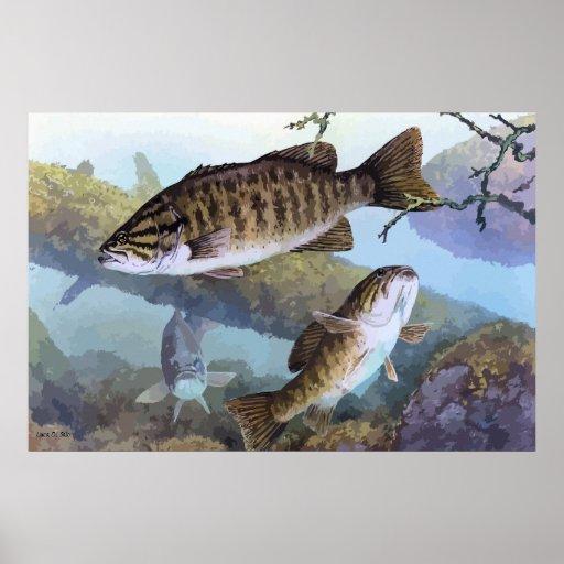 Smallmouth bass painting print
