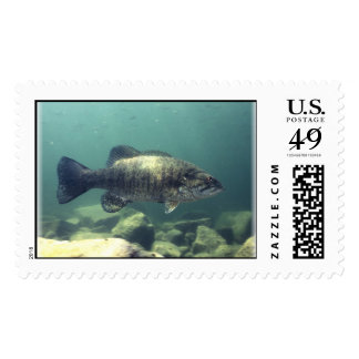 Smallmouth Bass Postage