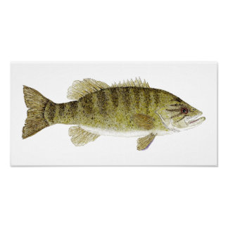 Smallmouth Bass Watercolor Poster