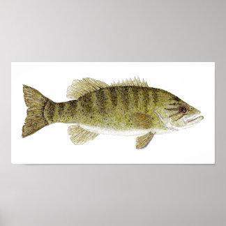 Smallmouth Bass Watercolor Poster