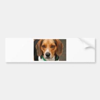 Smart Beautiful Beagle Hunting Dog Bumper Sticker