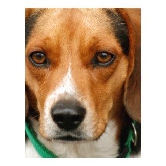 Smart Beautiful Beagle Hunting Dog Letterhead