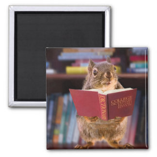 Smart Squirrel Reading a Dictionary Magnet
