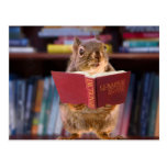 Smart Squirrel Reading a Dictionary Post Card