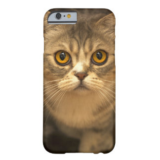 Smarty Cat iPhone 6/6s Case