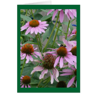 Smell the Coneflowers In Kentucky Greeting Card