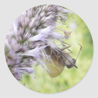 Smell The Flowers – Skipper Butterfly on Agastache Classic Round Sticker