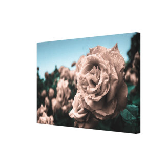 Smell the Roses No2 Canvas Prints