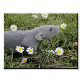 Smelling the Daisies Poster