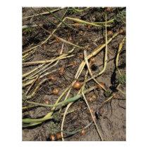Smelly Onion Crop in the Field Letterhead