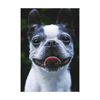 Smile! Boston Terrier Canvas Print