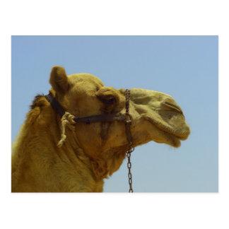 Smile - camel head with blue sky postcard