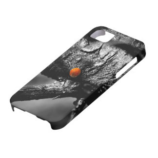 smile for a ladybug iPhone SE/5/5s case