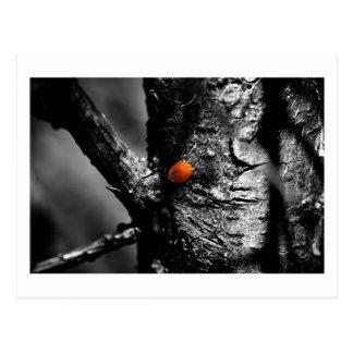 smile for a ladybug postcard