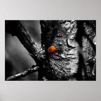 smile for a ladybug poster