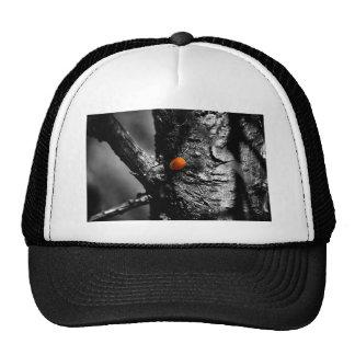 smile for a ladybug trucker hat