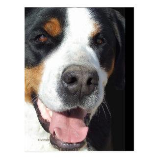 Smile! Greater Swiss Mountain Dog Postcard