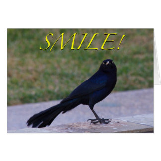 """Smile!"" Greeting Card - Great-Tailed Grackle"