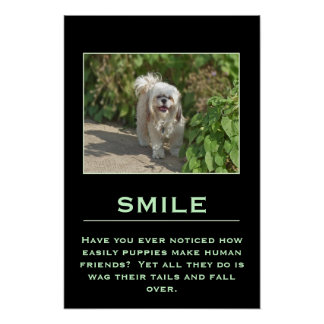 Smile Inspirational Poster with Cute Shih Tzu Dog