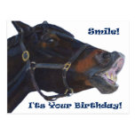Smile!  It's Your Birthday! Horse Postcards