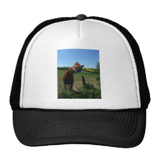 Smile of a horse front of a rape field trucker hat