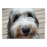 Smile Old English Sheepdog Card