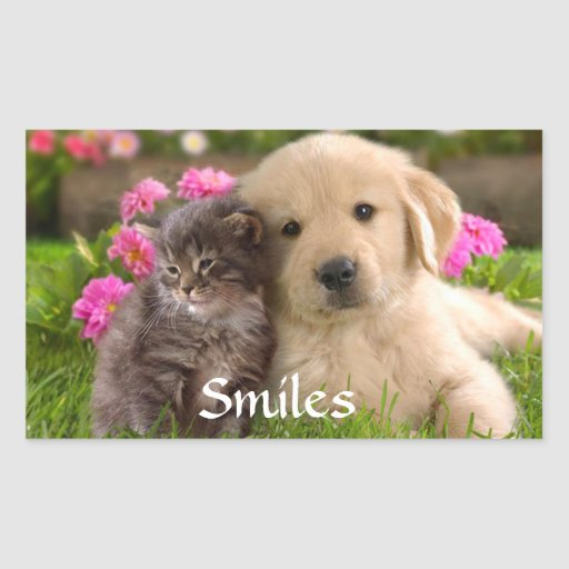 Smiles Golden Retriever Puppy  & Kitten  Sticker