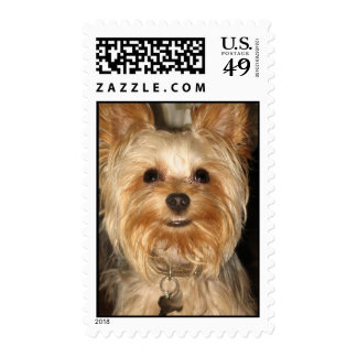 smiley yorkie stamps