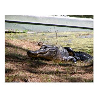 Smiling Aligator - Postcard