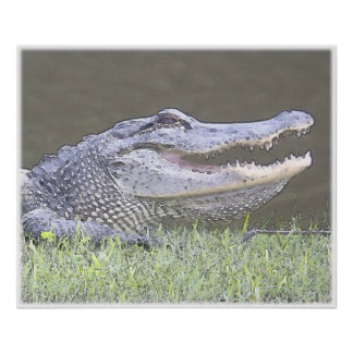 Smiling Alligator Print