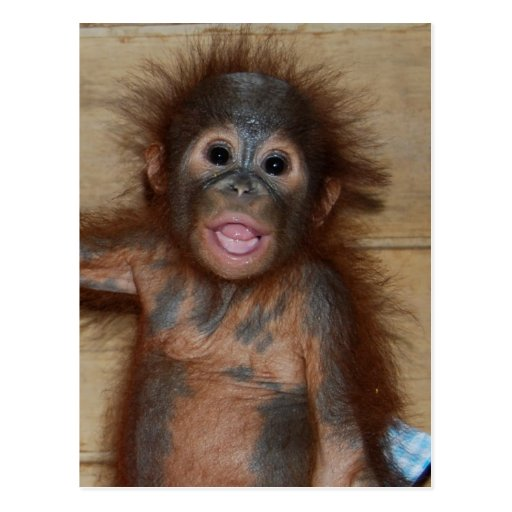 Smiling Baby Orangutan in Diapers Borneo Orphanage Postcard