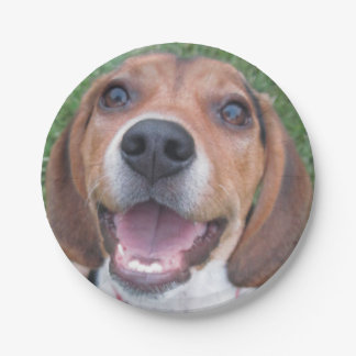 Smiling Beagle Pup Paper Plate