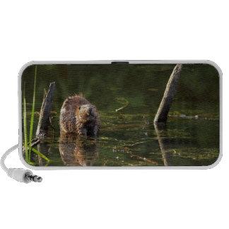 Smiling Beaver Travelling Speaker