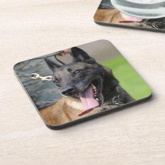 Smiling Belgian Malinois Dog Coaster