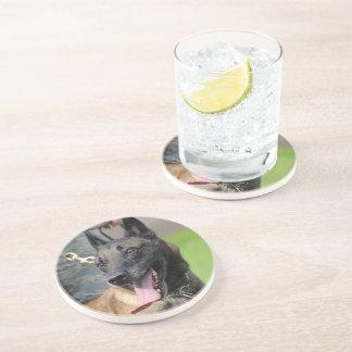 Smiling Belgian Malinois Dog Drink Coaster