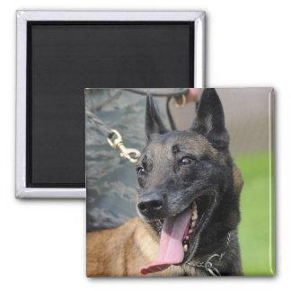 Smiling Belgian Malinois Dog Magnet