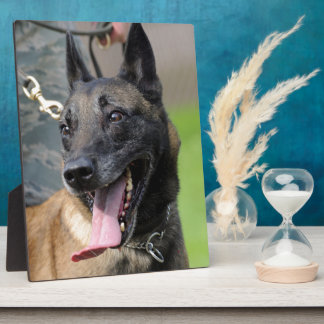 Smiling Belgian Malinois Dog Plaque