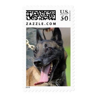 Smiling Belgian Malinois Dog Postage