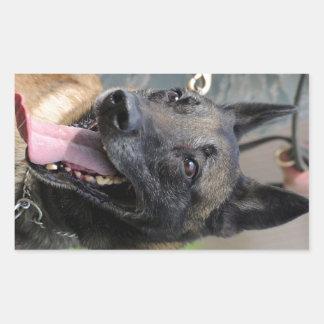 Smiling Belgian Malinois Dog Rectangular Sticker