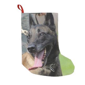 Smiling Belgian Malinois Dog Small Christmas Stocking