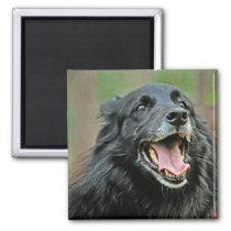 Smiling Black Dog on a Green Bokeh Background Magnet