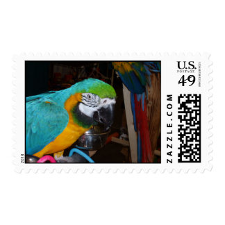 Smiling Blue and Gold Macaw Stamp