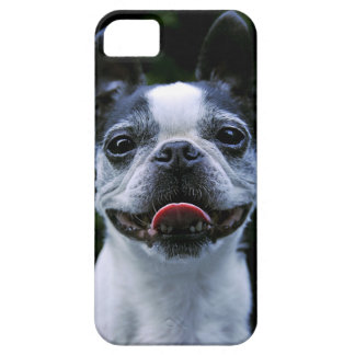 Smiling Boston Terrier iphone 5 Case