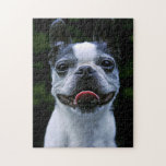 Smiling Boston Terrier Jigsaw Puzzle at Zazzle
