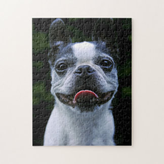 Smiling Boston Terrier Puzzles