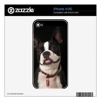 Smiling Boston terrier with collar Decals For The iPhone 4S