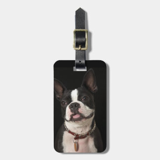 Smiling Boston terrier with collar Luggage Tag