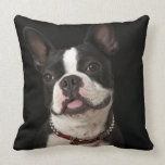 Smiling Boston terrier with collar Pillows
